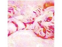 家貓-D SOHO